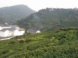 Long Jing Tea Village