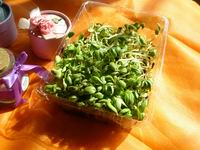 Bean sprout picture1